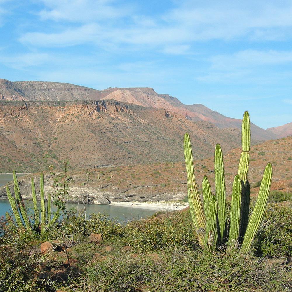 Baja, Mexico (Black Feather)